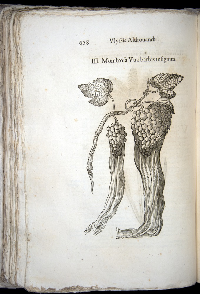Image of Aldrovandi-1570-0668