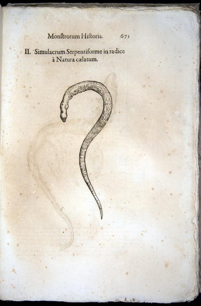 Image of Aldrovandi-1570-0671