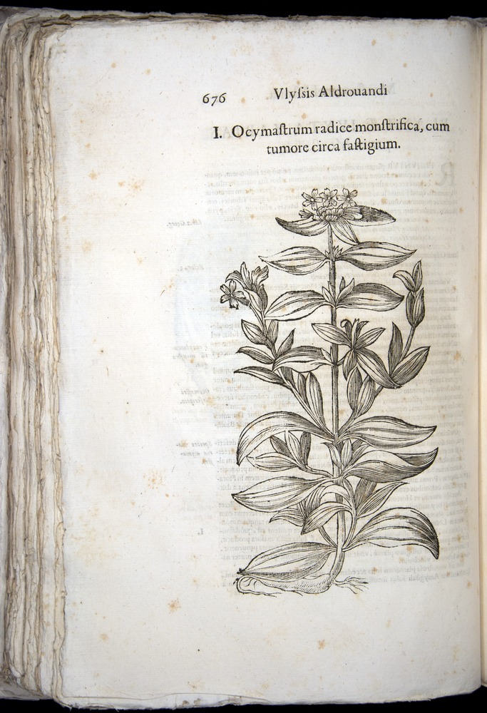 Image of Aldrovandi-1570-0676