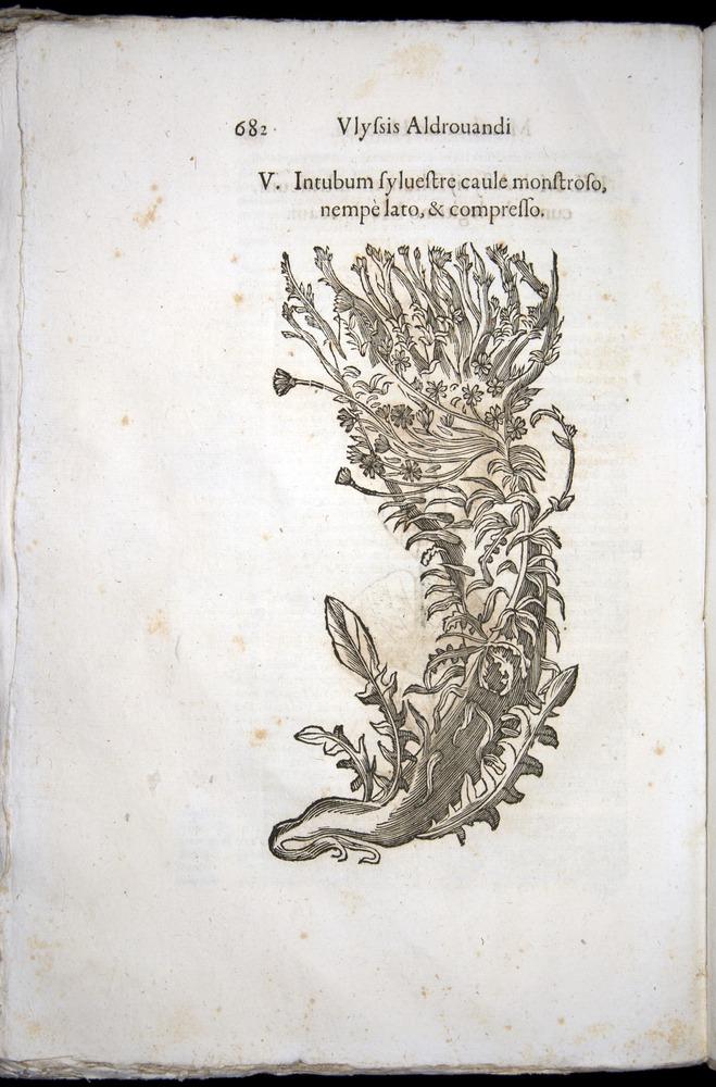 Image of Aldrovandi-1570-0682