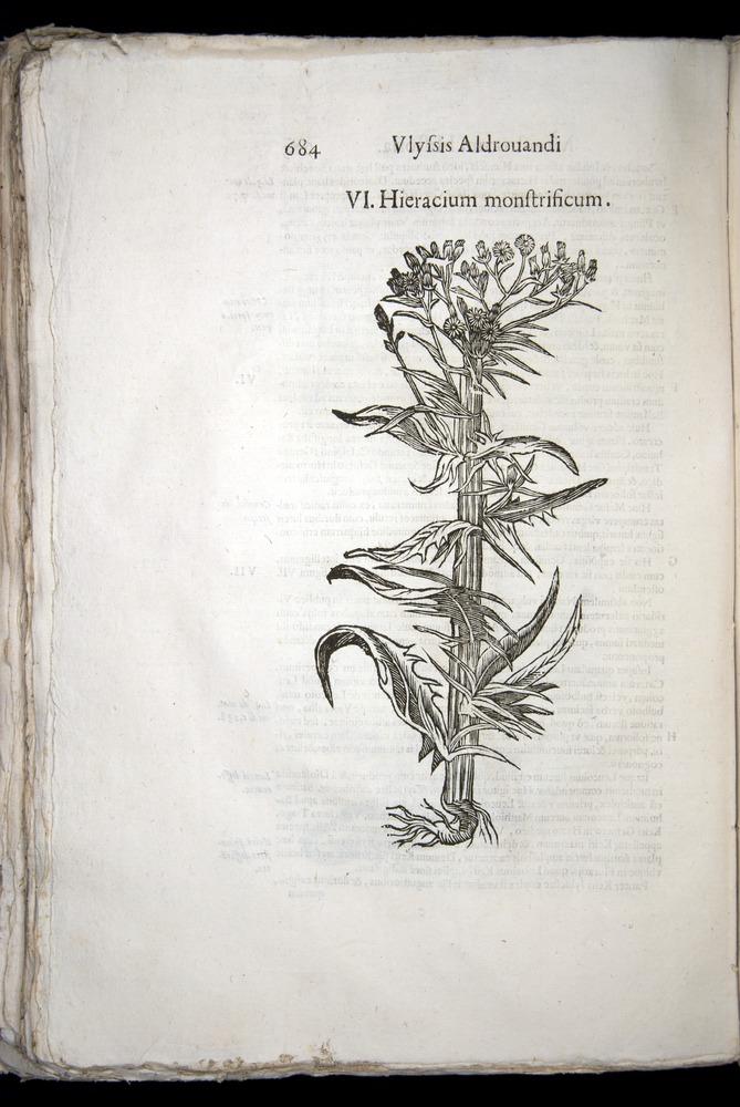 Image of Aldrovandi-1570-0684