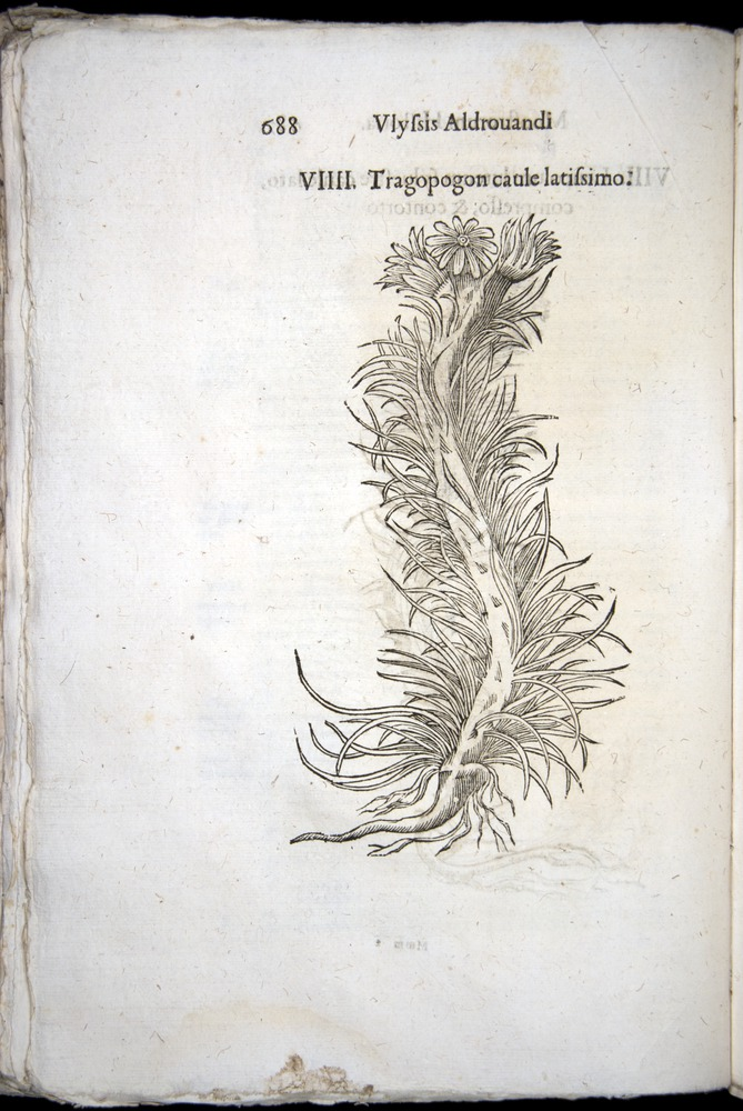 Image of Aldrovandi-1570-0688