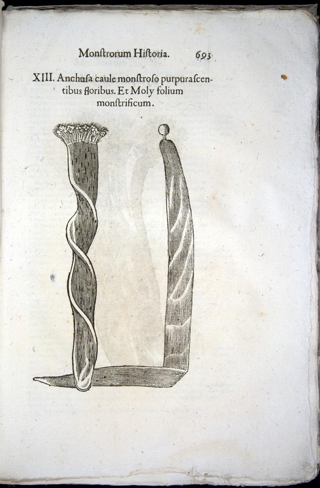 Image of Aldrovandi-1570-0693