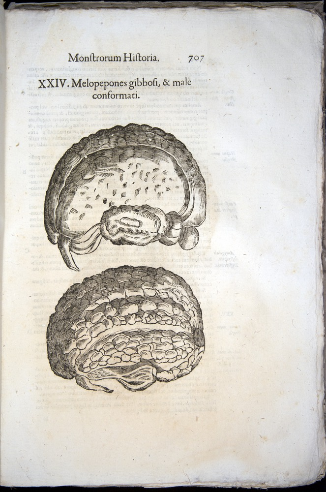 Image of Aldrovandi-1570-0707