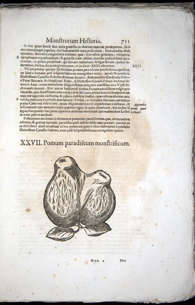 Image of Aldrovandi-1570-0711
