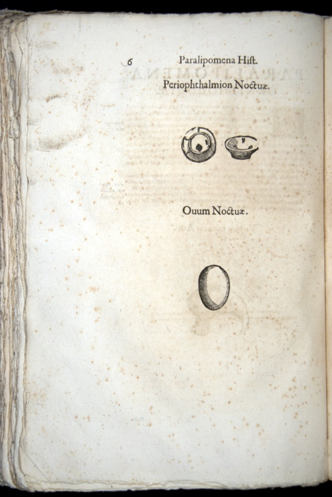 Image of Aldrovandi-1570-z006