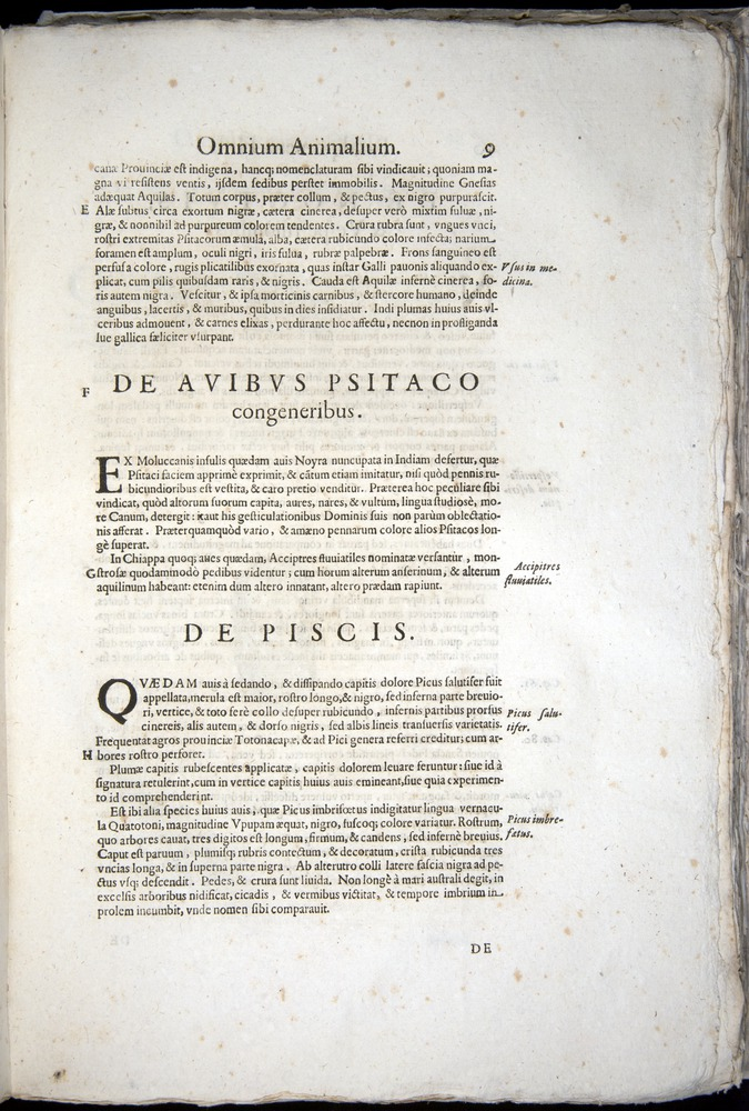 Image of Aldrovandi-1570-z009