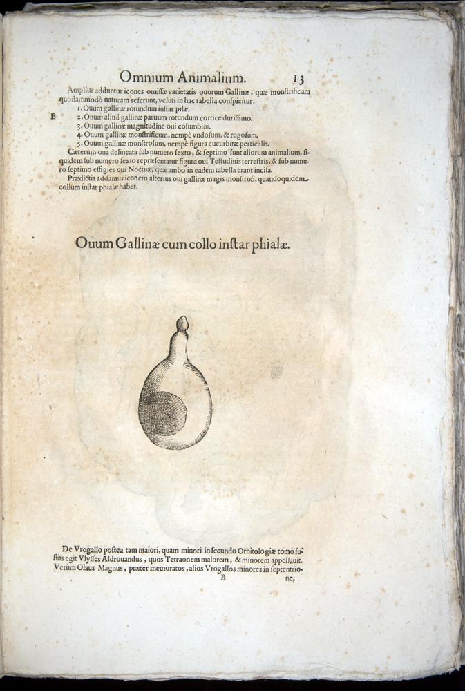 Image of Aldrovandi-1570-z013