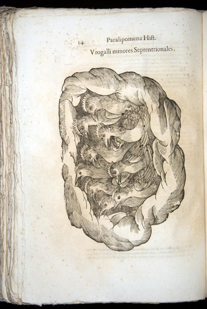 Image of Aldrovandi-1570-z014