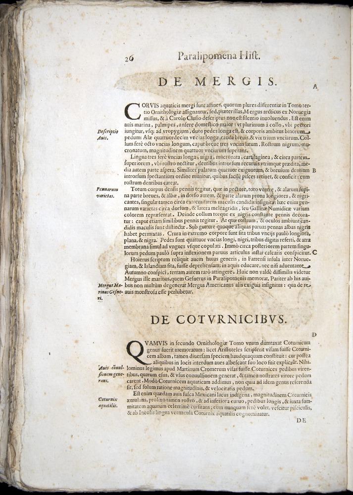 Image of Aldrovandi-1570-z026