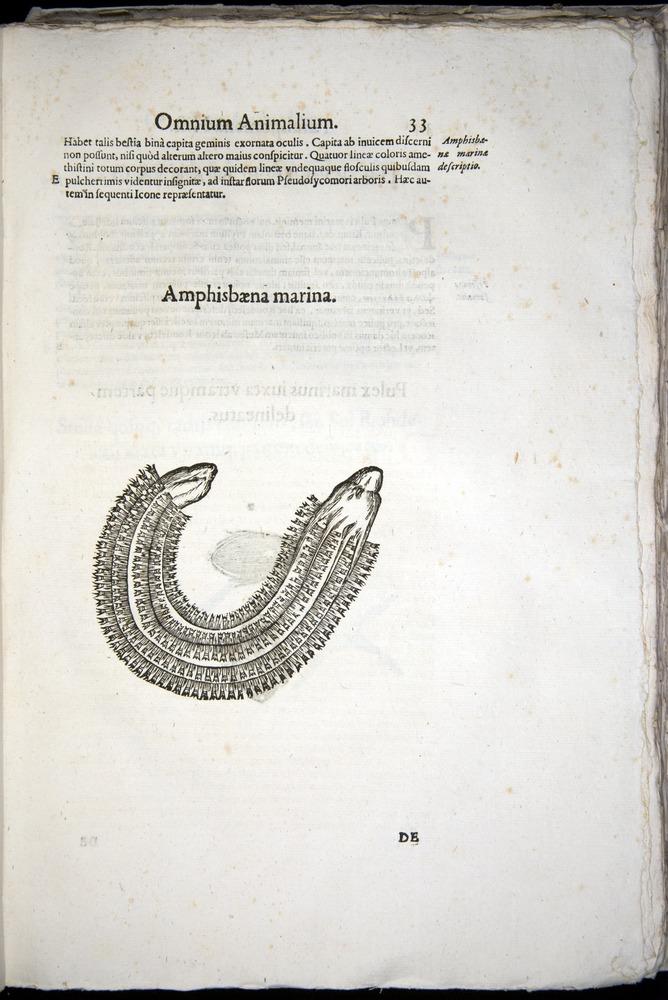Image of Aldrovandi-1570-z033