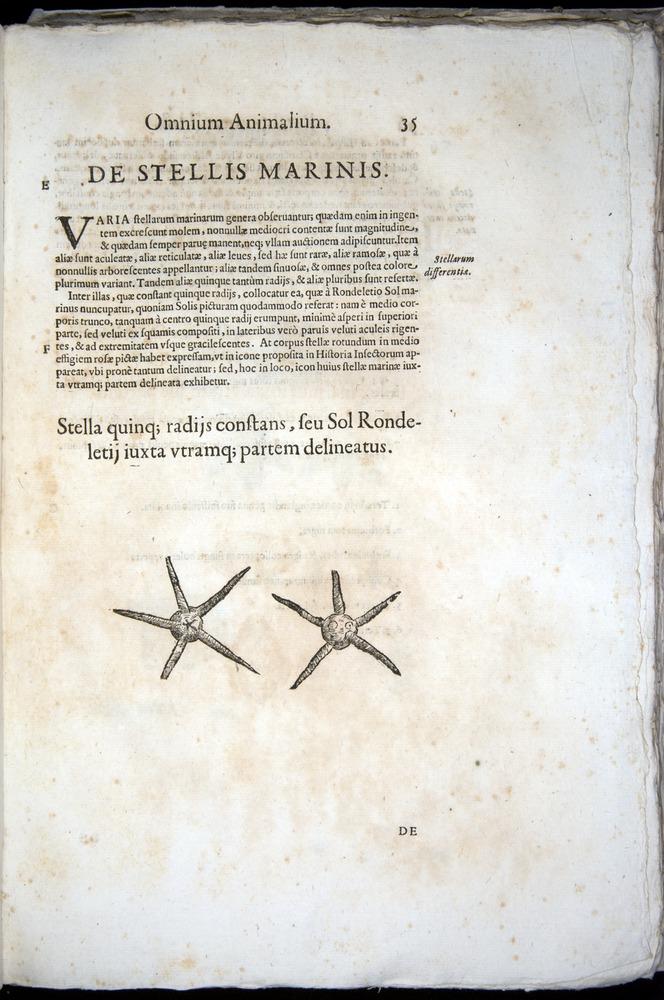 Image of Aldrovandi-1570-z035