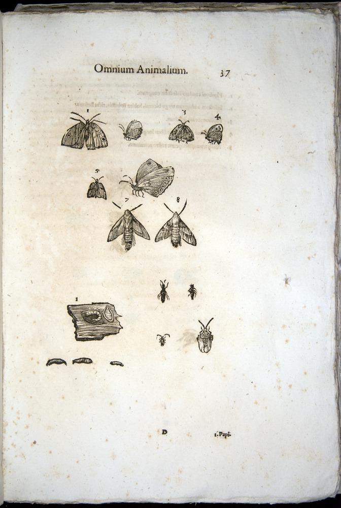 Image of Aldrovandi-1570-z037