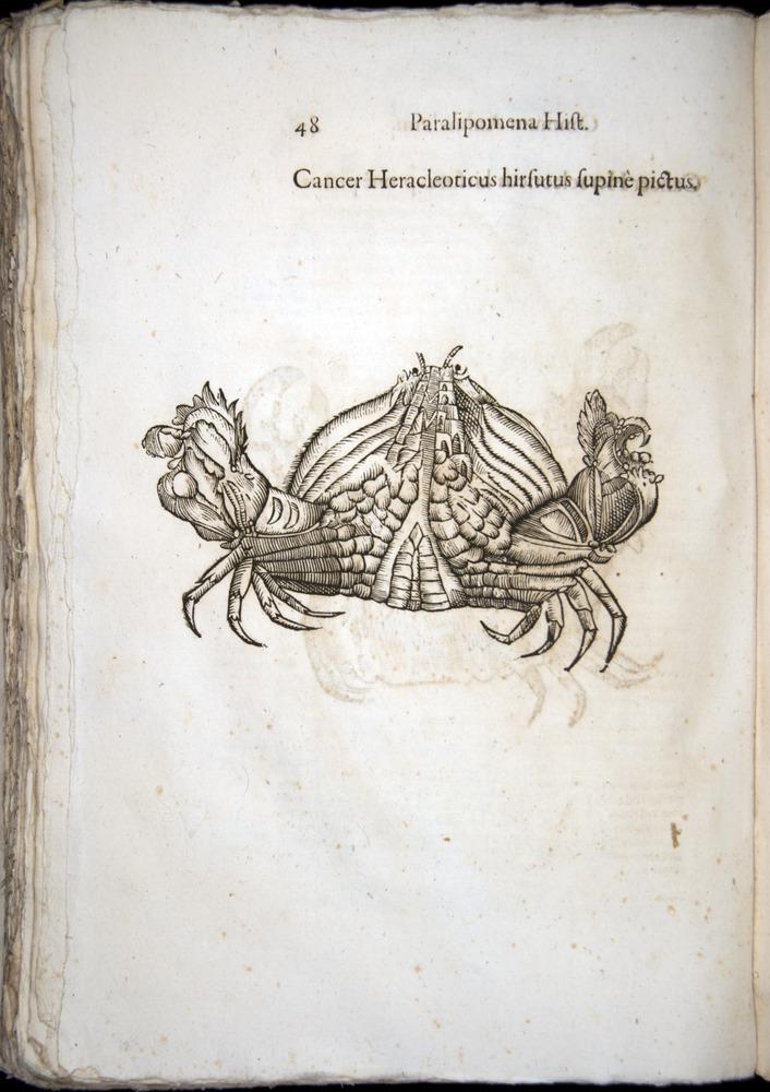 Image of Aldrovandi-1570-z048