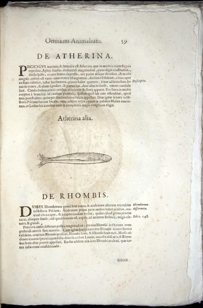 Image of Aldrovandi-1570-z059