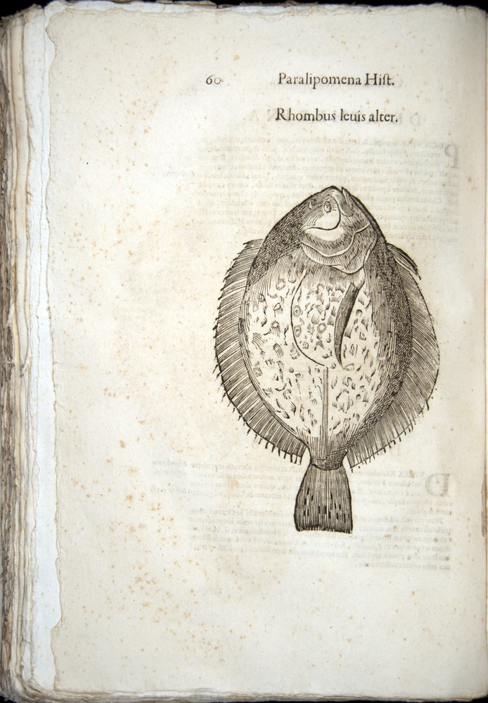 Image of Aldrovandi-1570-z060