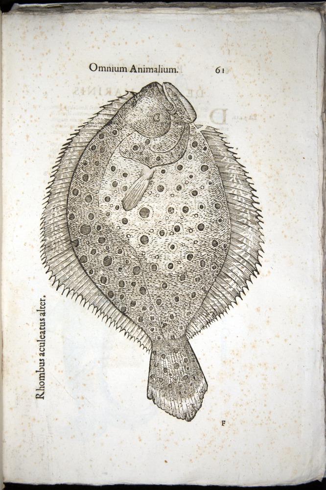 Image of Aldrovandi-1570-z061