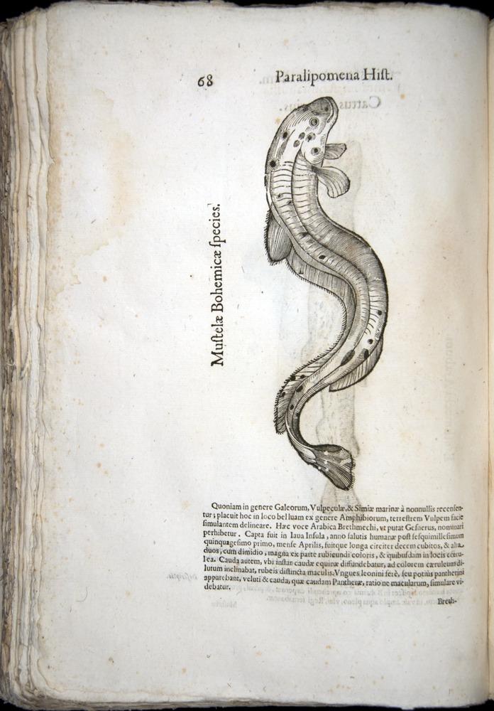 Image of Aldrovandi-1570-z068