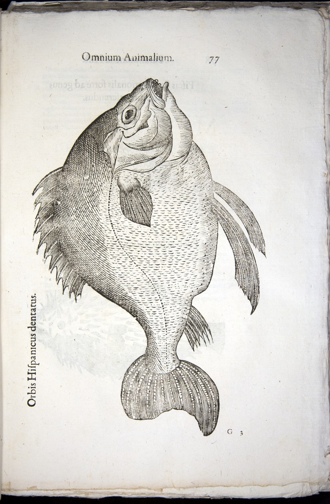 Image of Aldrovandi-1570-z077