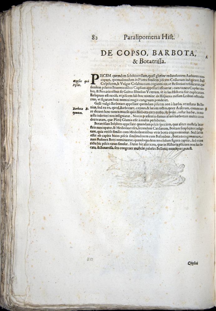 Image of Aldrovandi-1570-z082