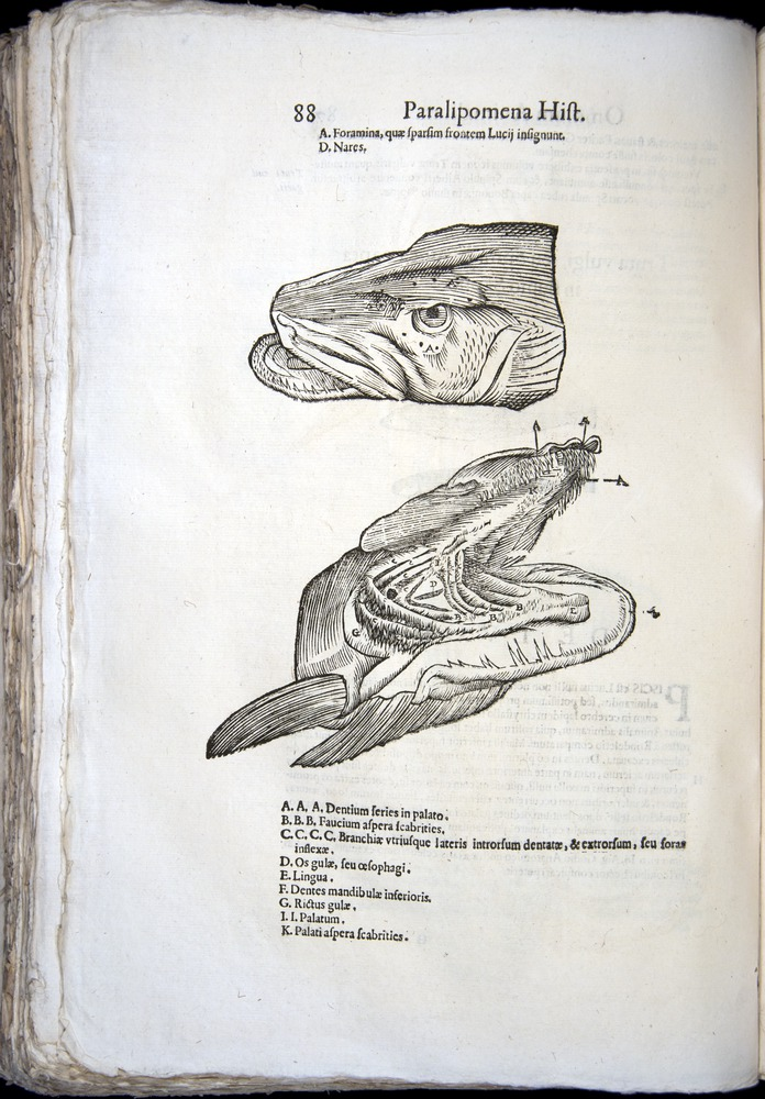 Image of Aldrovandi-1570-z088