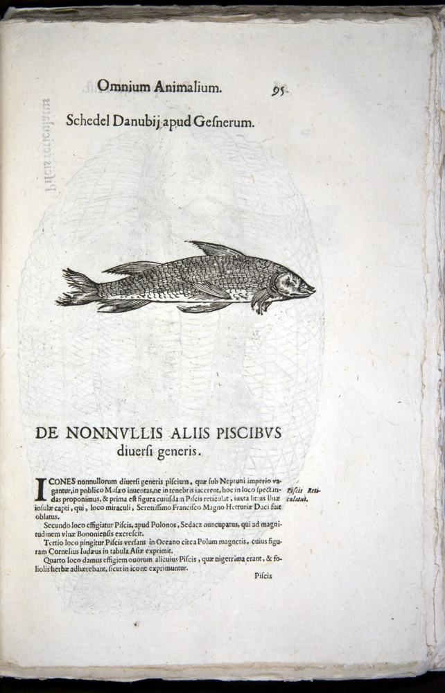 Image of Aldrovandi-1570-z095