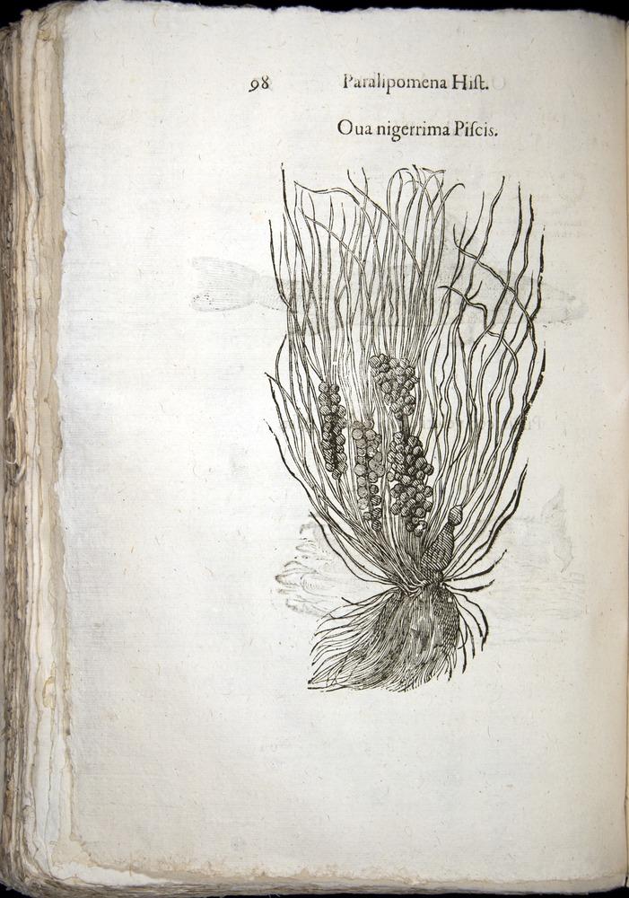 Image of Aldrovandi-1570-z098