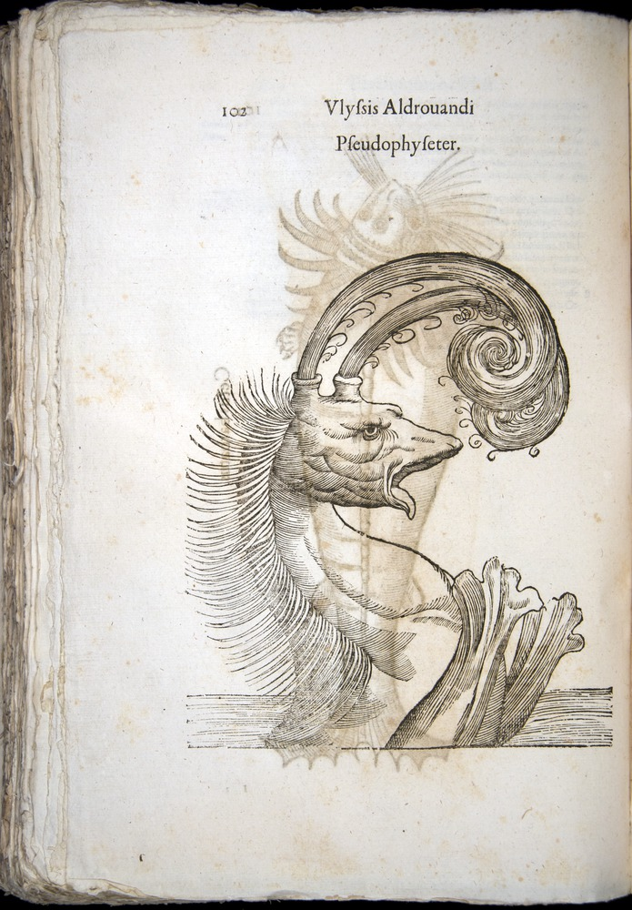 Image of Aldrovandi-1570-z102