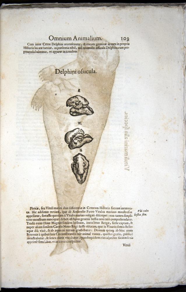 Image of Aldrovandi-1570-z103