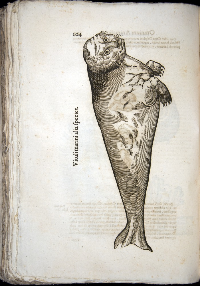 Image of Aldrovandi-1570-z104