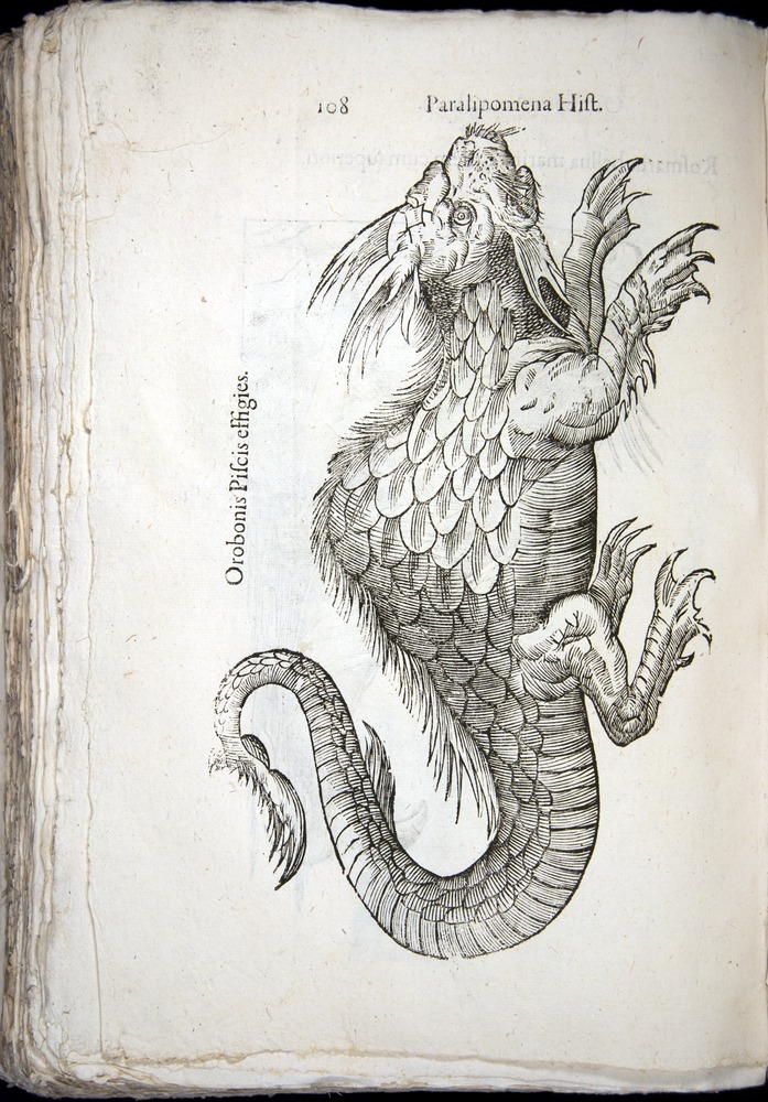 Image of Aldrovandi-1570-z108