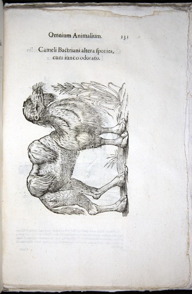 Image of Aldrovandi-1570-z131