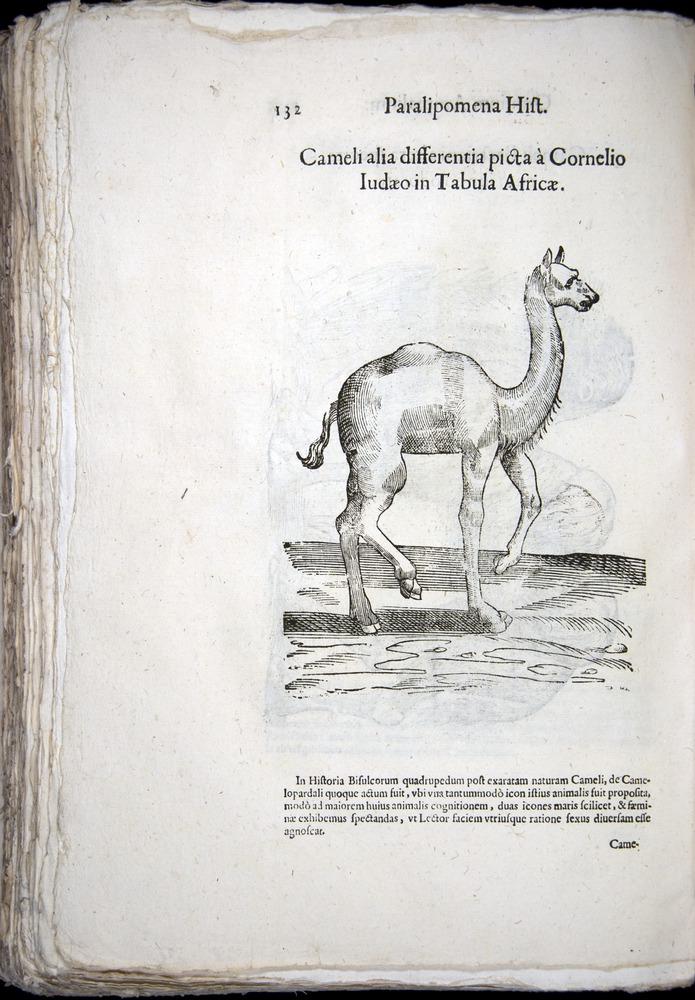 Image of Aldrovandi-1570-z132