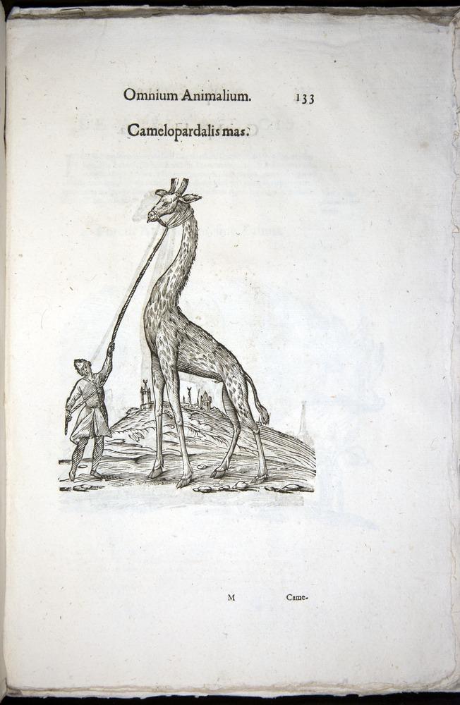 Image of Aldrovandi-1570-z133