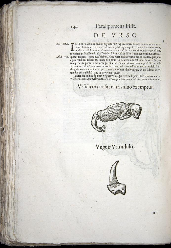 Image of Aldrovandi-1570-z140