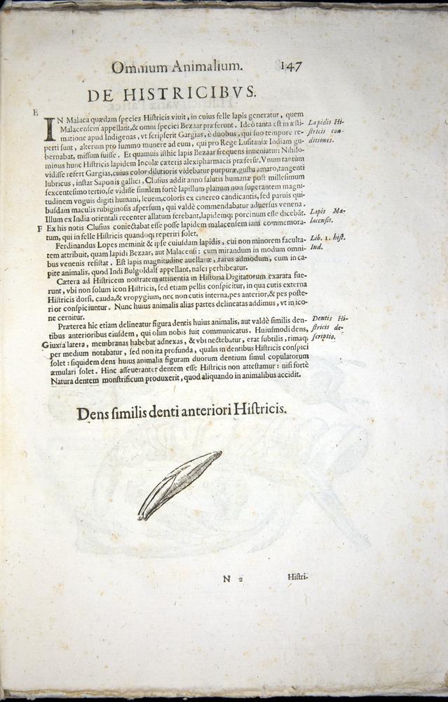 Image of Aldrovandi-1570-z147