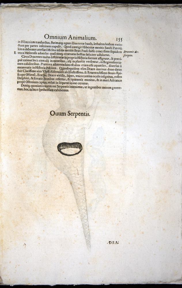 Image of Aldrovandi-1570-z155