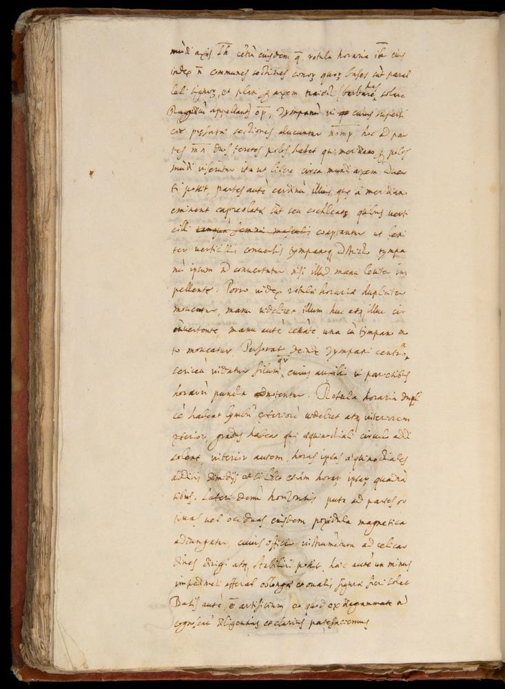 Image of Baldi-1592-175v