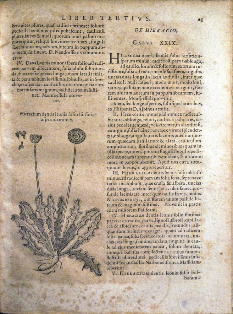Image of Bauhin-1671-h4r