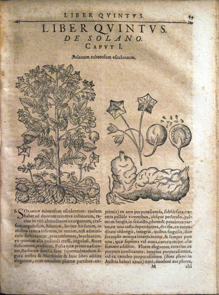 Image of Bauhin-1671-m1r