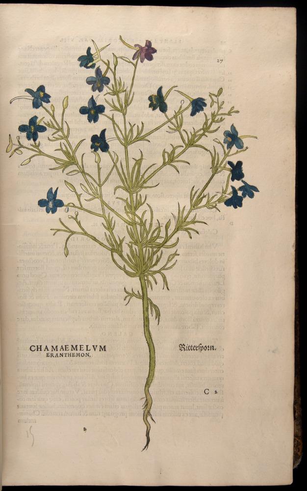 Image of Fuchs-1542-027