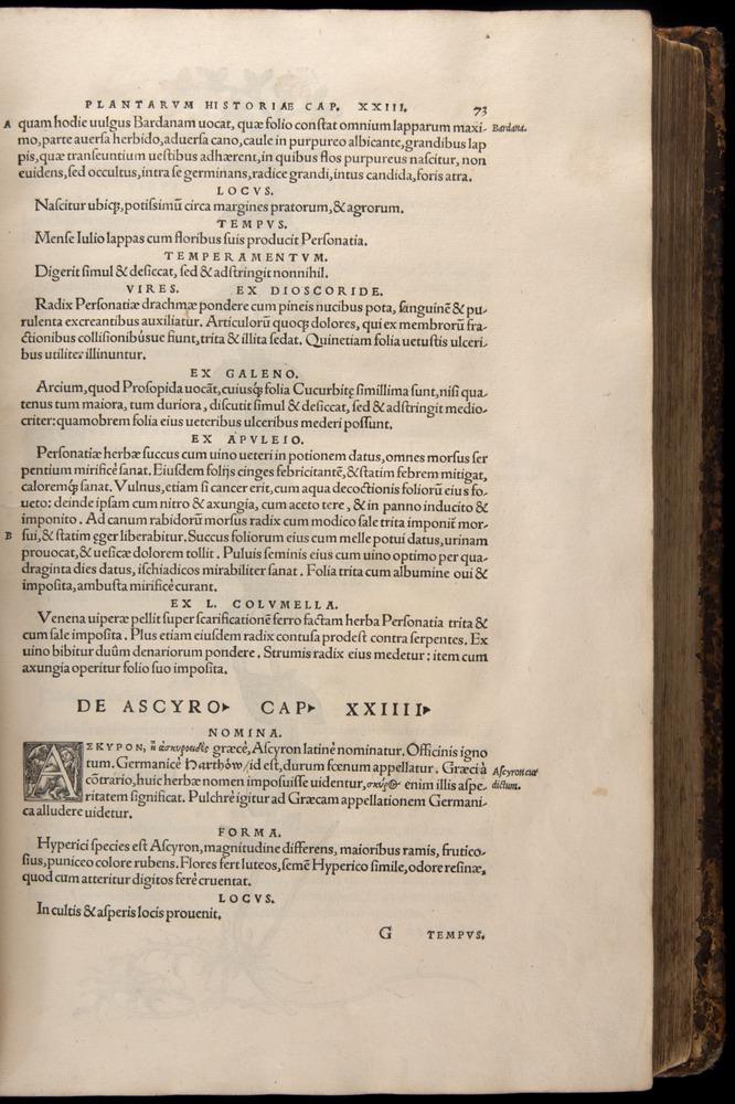 Image of Fuchs-1542-073
