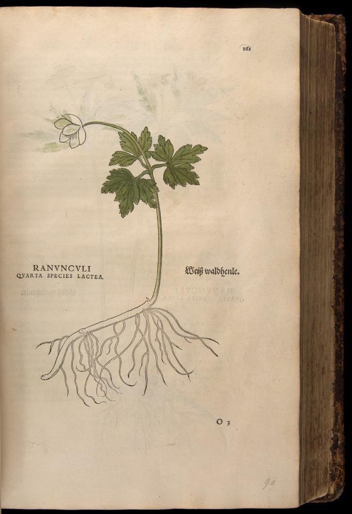 Image of Fuchs-1542-161