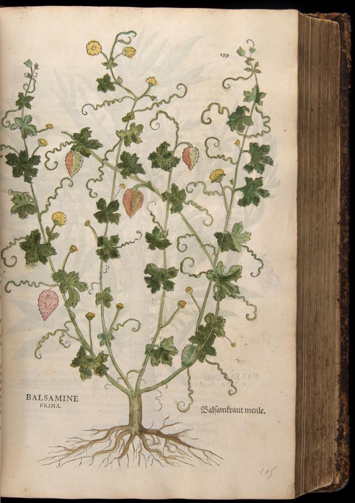 Image of Fuchs-1542-189