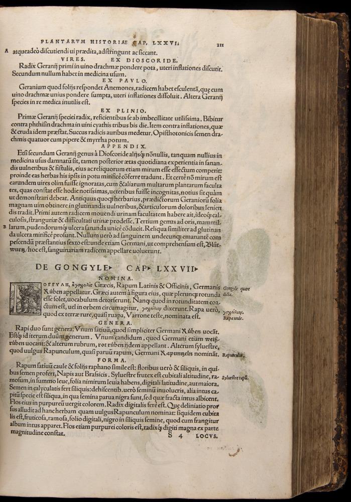 Image of Fuchs-1542-211