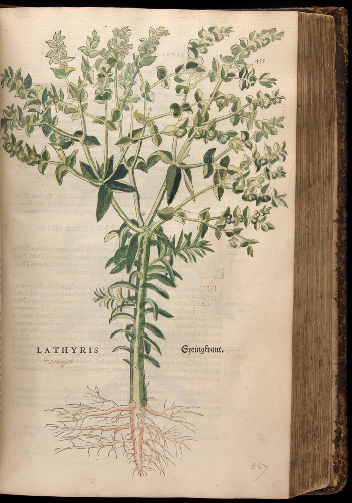 Image of Fuchs-1542-455