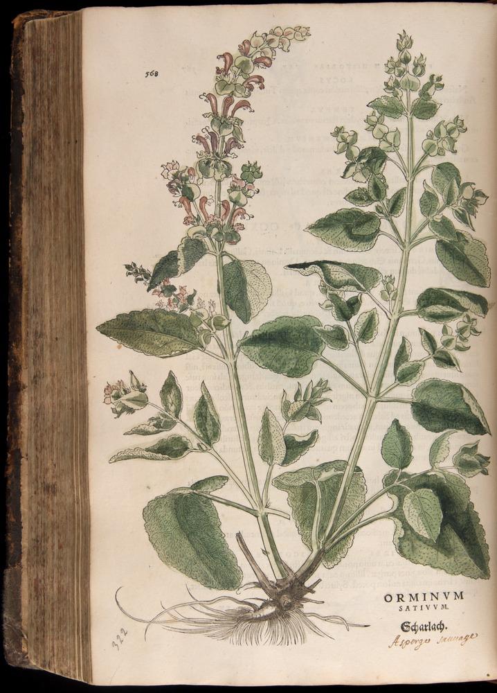 Image of Fuchs-1542-568