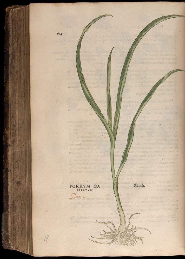 Image of Fuchs-1542-634