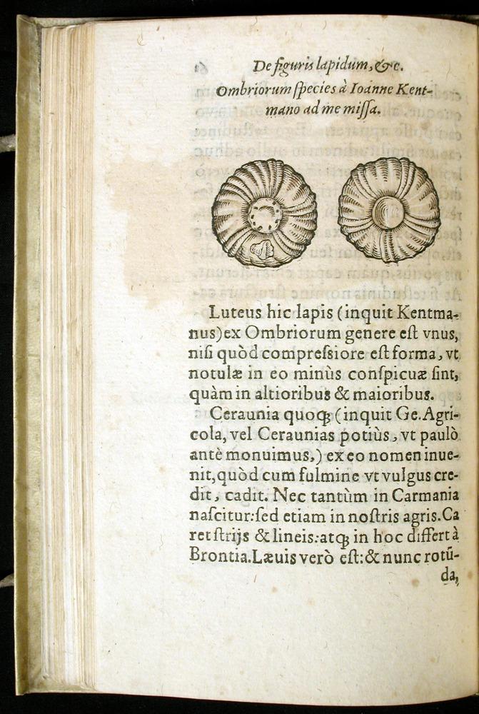Image of Gesner-1565a-0061v