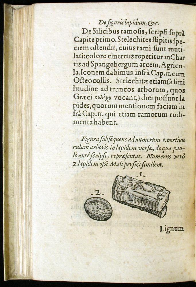 Image of Gesner-1565a-0125v